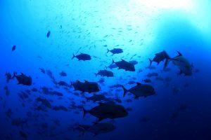 ソコロ諸島ダイブクルーズ | 海...